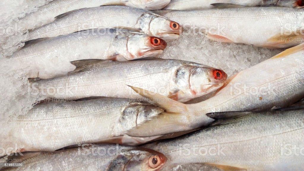 Threadfins, ( Polynemidae ) stock photo