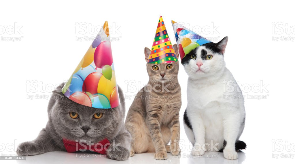 Three Adorable Cats On A Birthday Party Royalty Free Stock Photo