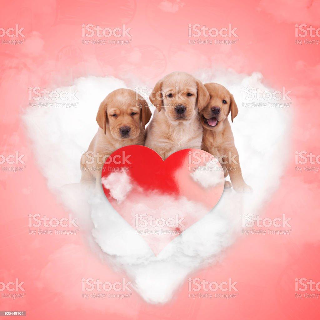 three adorable labrador retriever puppies sitting on a heart cloud stock photo