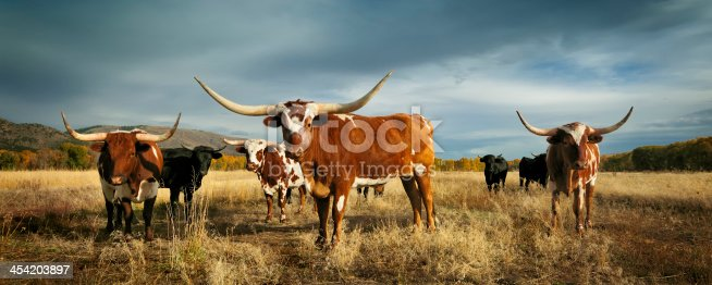 Three big and bold longhorn cattle lined up with beautiful background
