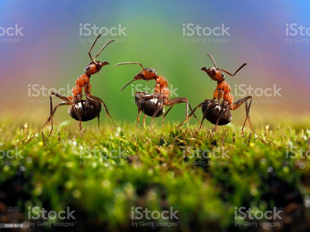 Three ant. Conflict, ants fight. stock photo