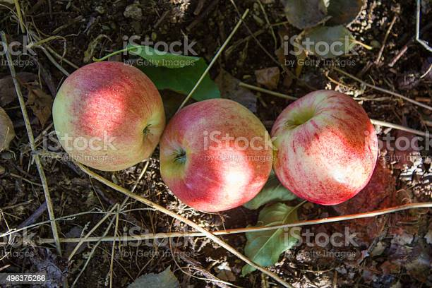 Three Apples On The Ground Stock Photo - Download Image Now