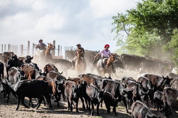 Three argentine gauchos herding cattle in dusty enclosure picture id1197668895?b=1&k=6&m=1197668895&s=612x612&w=0&h=yws8cce8inc1tvypb4ulnljkzotgf0pdacrgkpgz9gk=