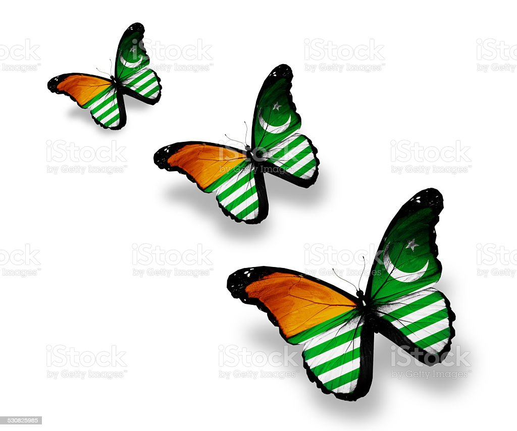Three Azad Kashmir flag butterflies, isolated on white stock photo