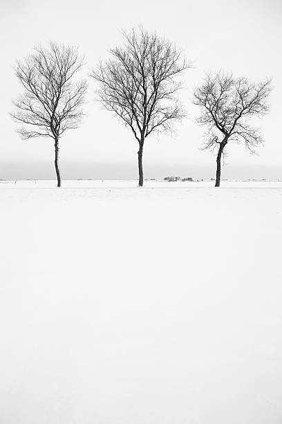 Three Bare Trees In Snow Landscape, Black And White stock photo