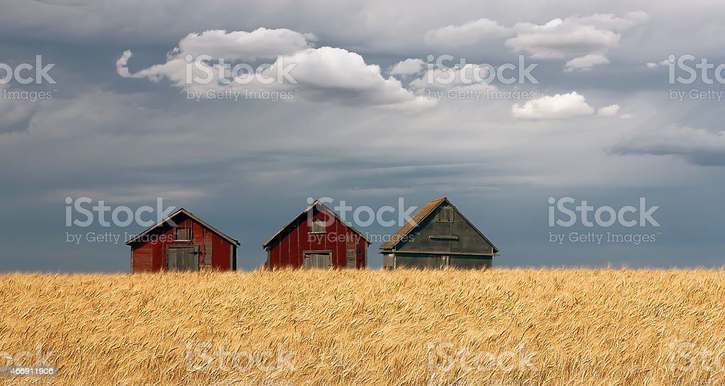 Three Barns royalty-free stock photo