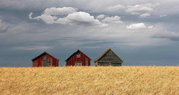 Three Barns stock photo
