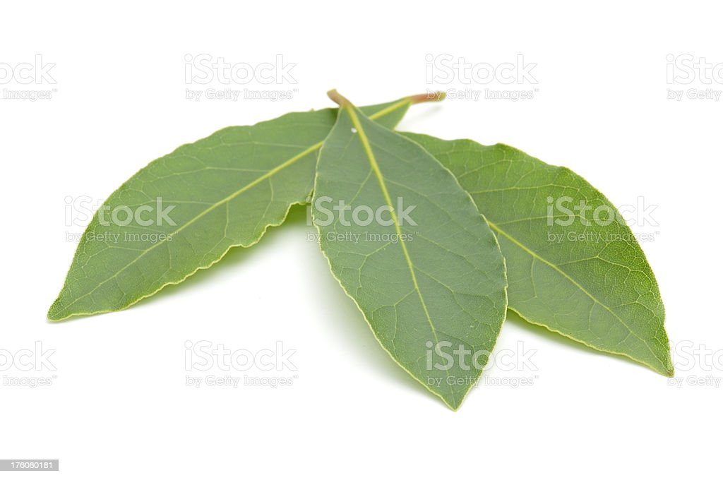 Three Bay Leaves royalty-free stock photo