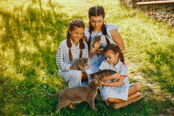 three beautiful girls with cats stock photo
