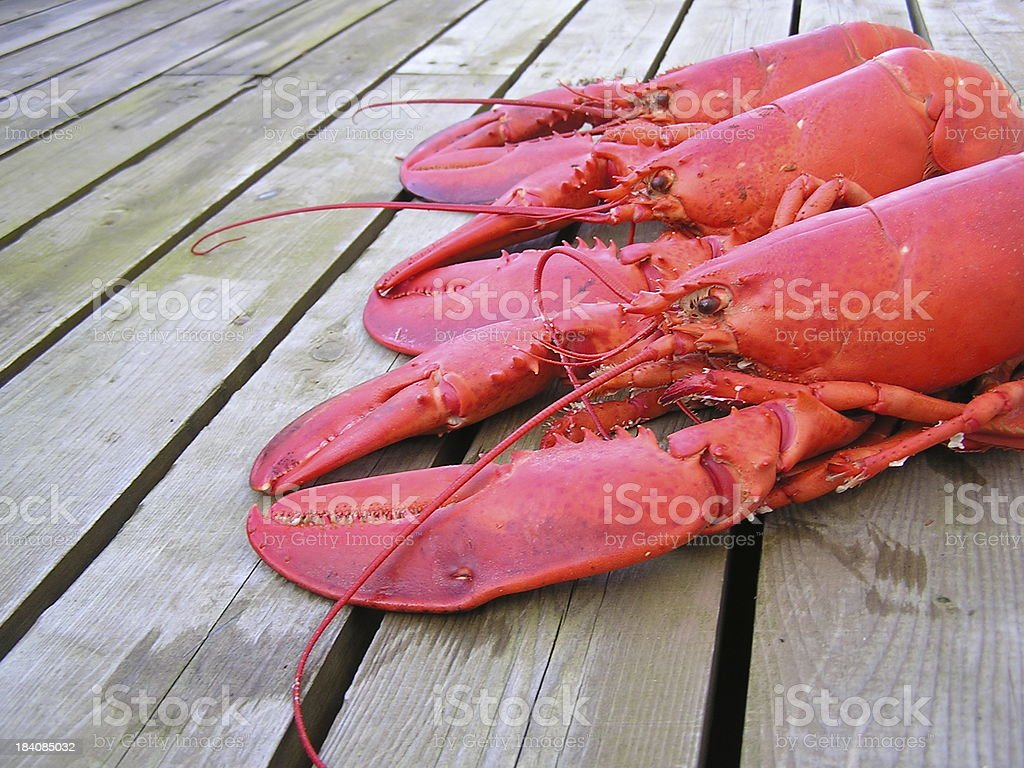 Three Beautiful Red Nova Scotia Lobsters royalty-free stock photo