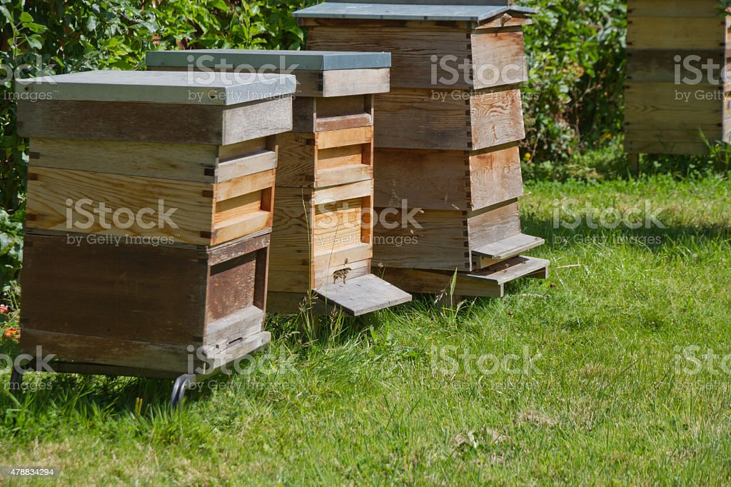 Three beehives in English country garden stock photo