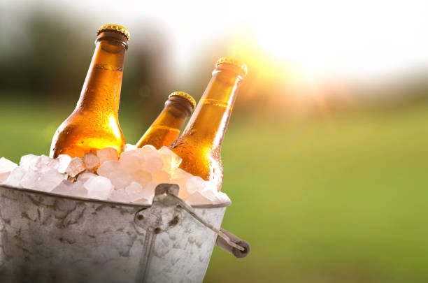 Three beer bottles in bucket full of ice cubes field stock photo