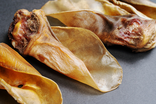 Three big pieces of dehydrated beef ears, used like dry dog treats. Gray background, close up, copy space.