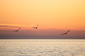 Three bird silhouettes flying over orange sunset evening sky