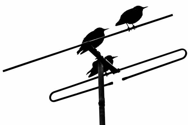 Three Birds in Silhouette stock photo