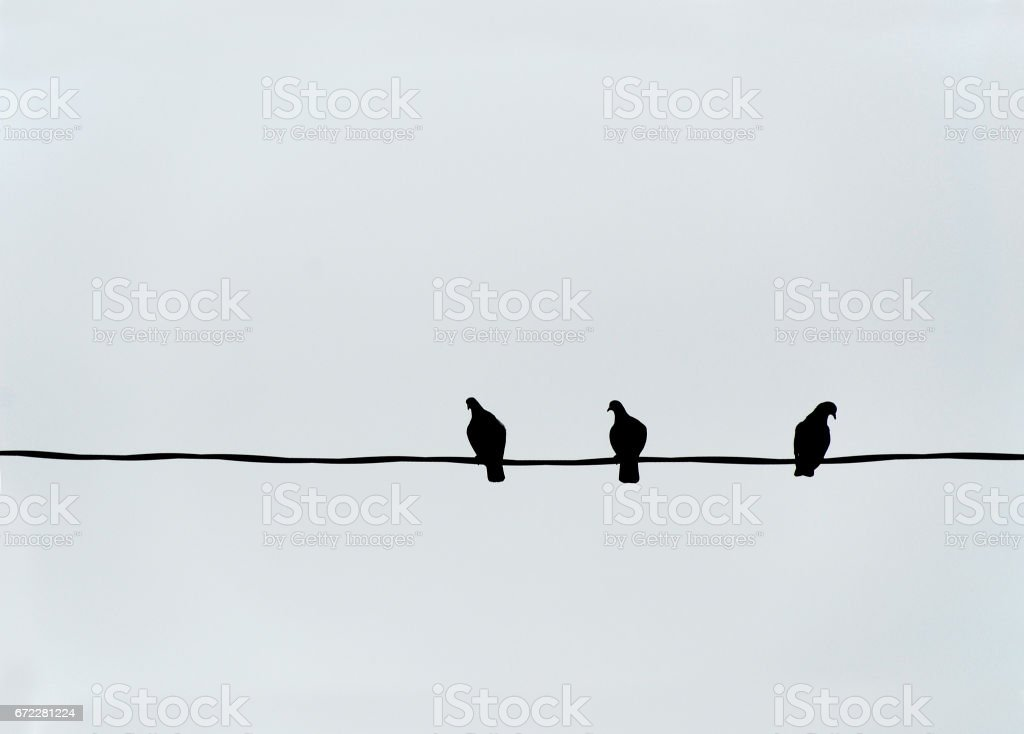 Three Birds on a Wire stock photo