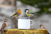 istock Three birds sitting on the edge of a tin cup 1197995970