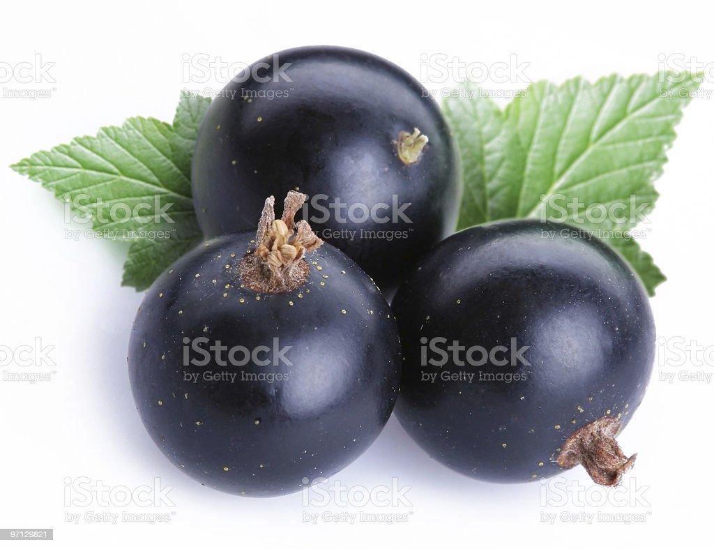 Three black currants royalty-free stock photo