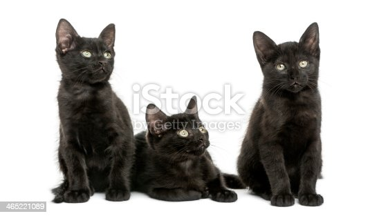 824824466 istock photo Three Black kittens looking away, 2 months old, isolated 465221089