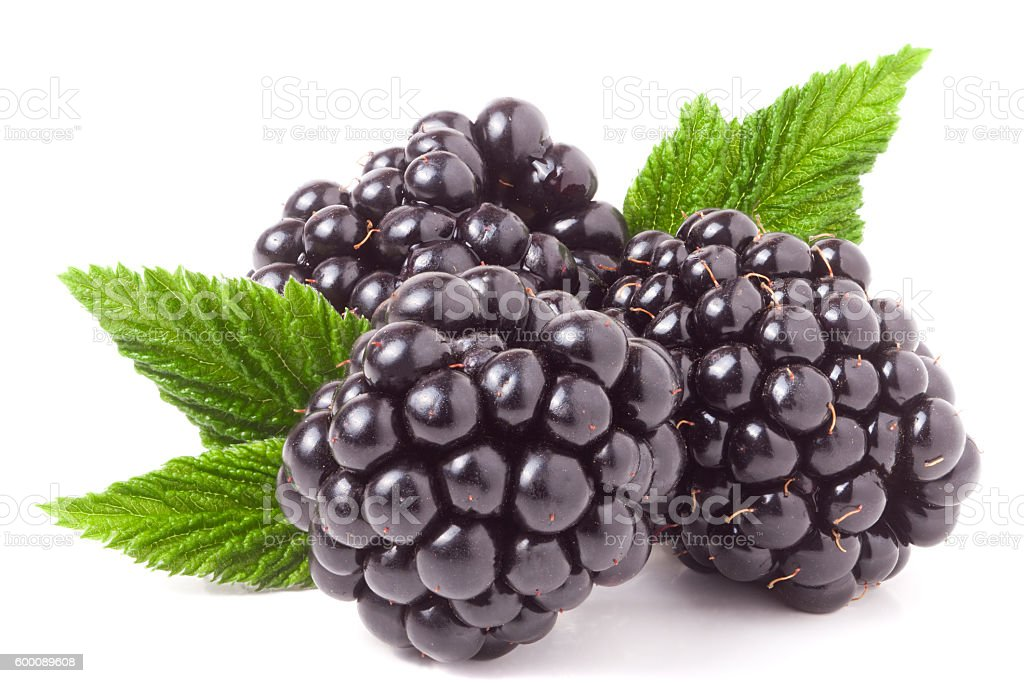 three blackberry with leaf isolated on a white background closeup stock photo