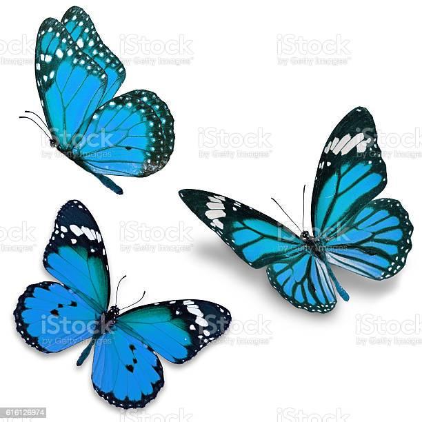Three blue butterfly picture id616126974?b=1&k=6&m=616126974&s=612x612&h=h6m26htnuhdmhzfqnuwkhkva258vadjxr0vlvnybw9u=