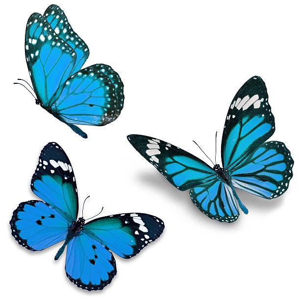 Tres mariposa azul  - foto de stock
