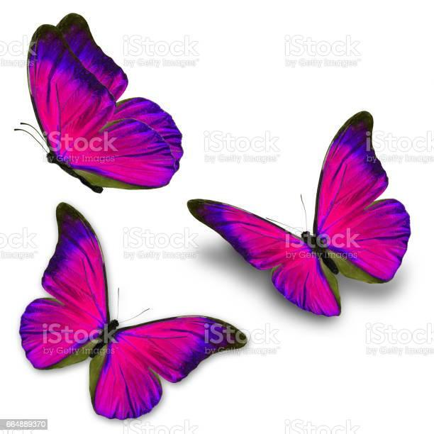 Three blue butterfly picture id664889370?b=1&k=6&m=664889370&s=612x612&h=oeauegkjqrubokulmavs9s5wss5kkhtg8ozza82 hhy=