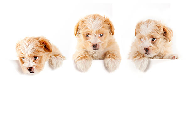 Three buddies picture id157641295?b=1&k=6&m=157641295&s=612x612&w=0&h=tk6cpygxmcncq8hpx pc3 uo76n4ybf9jtgy2 cxnmu=