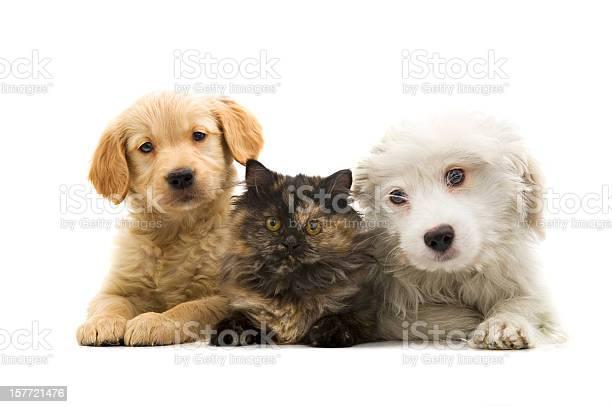 Three buddies picture id157721476?b=1&k=6&m=157721476&s=612x612&h=hllnd4k8qhc z4hud0t6mizs9nix6pzyl g6hbqenn8=