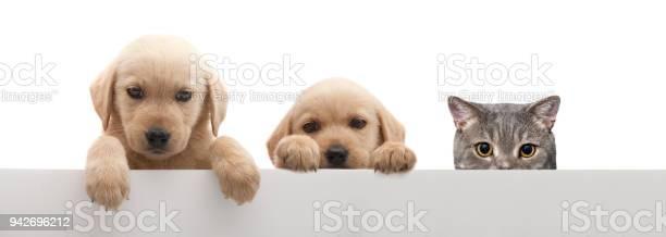 Three buddys picture id942696212?b=1&k=6&m=942696212&s=612x612&h=f6svcinregtsbbdgtdu bhawhi 1grljv8wlsjtlhy4=