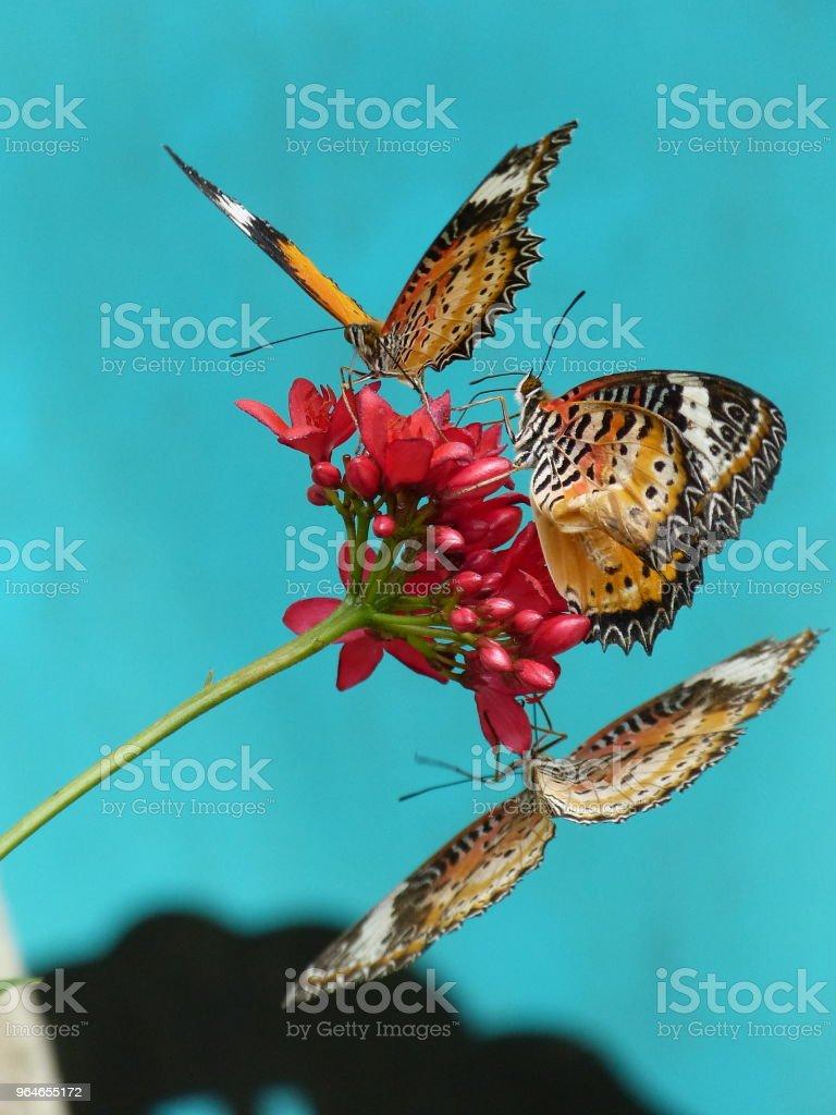 drei Schmetterlinge auf einer Blume – Foto