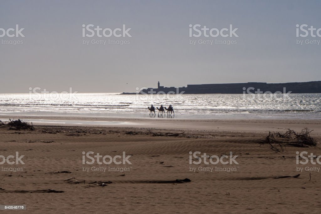 Three camels by the sea. stock photo