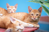 three cat on a blue background in sunlight. cat in the sky. a pet. beautiful kitten. place for text