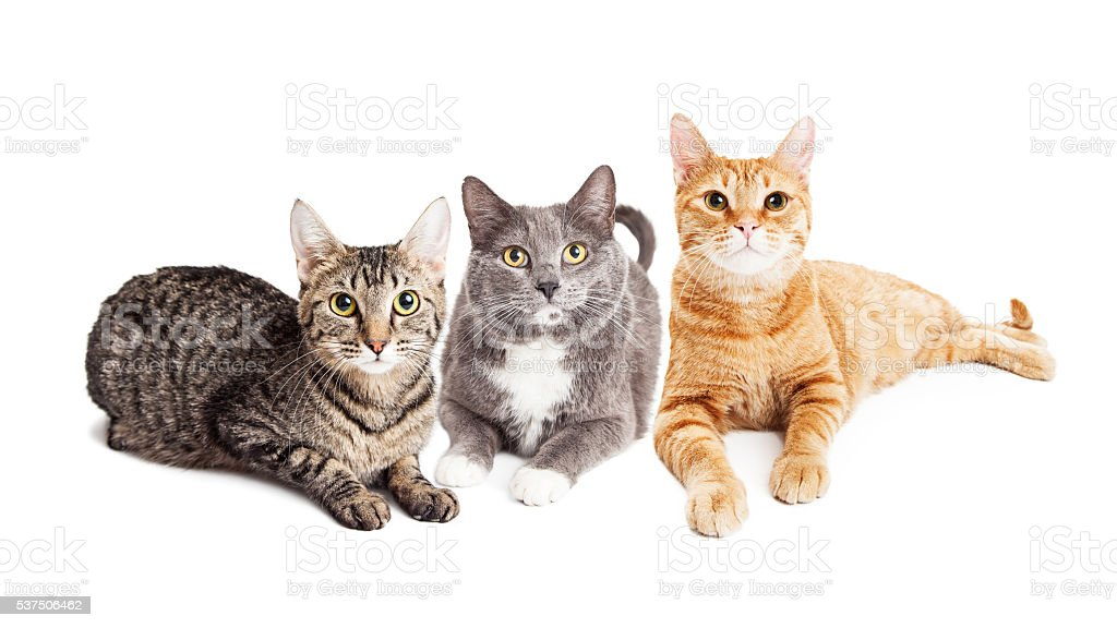 Three Cats Laying Together on White stock photo