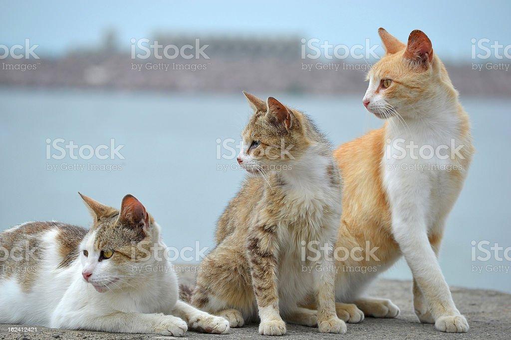 Three cats look royalty-free stock photo