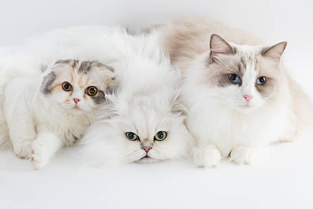 Three cats stock photo