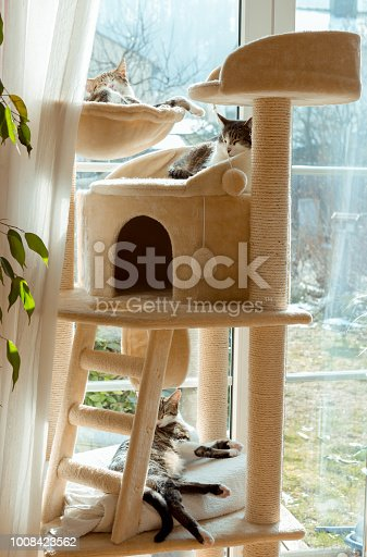 cat group in and on cat tree at window