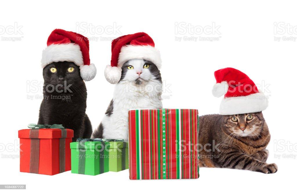 Drei Katzen Mit Weihnachtsgeschenke Stockfoto Und Mehr Bilder Von