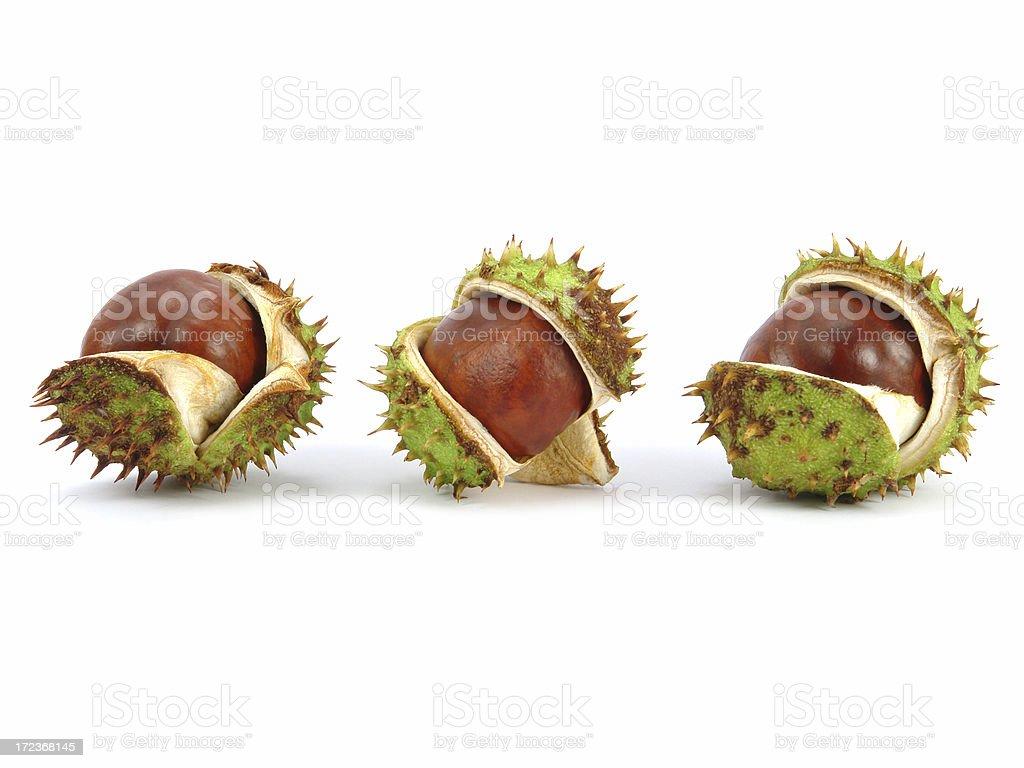 Three Chestnut husks royalty-free stock photo