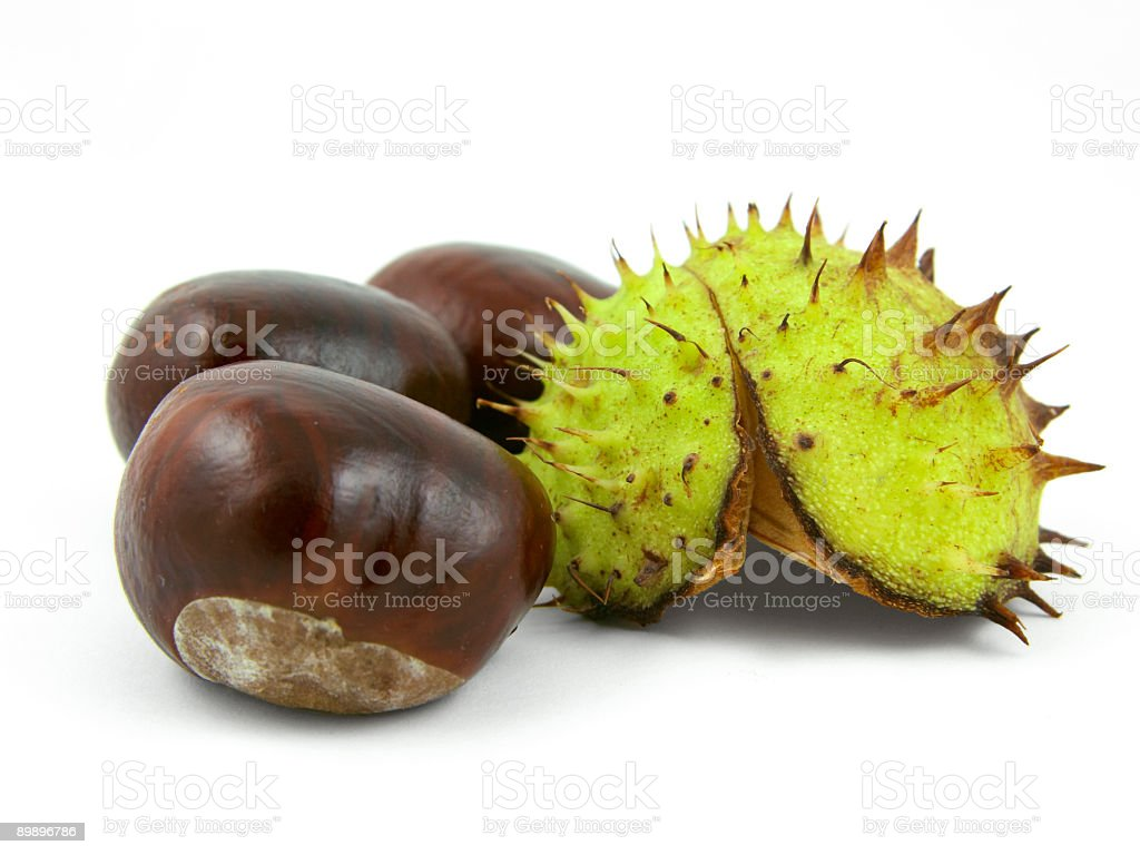 Three chestnuts and shell. royalty-free stock photo