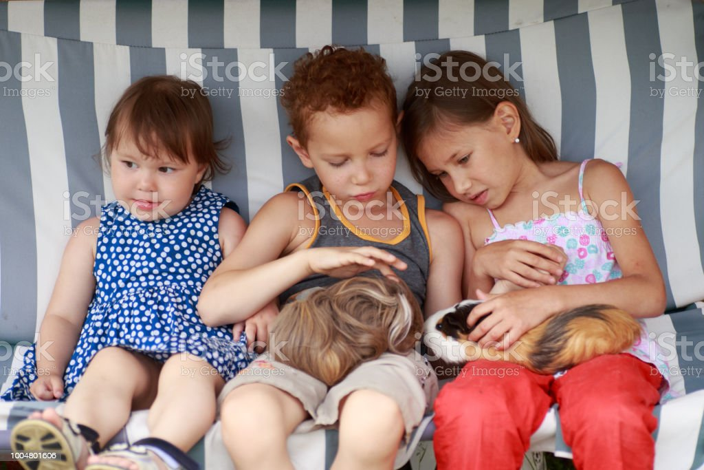 three children are sitting in a hammock and playing her guinea pig pet animal stock photo
