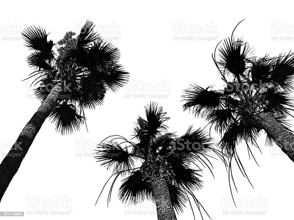 Três árvores de Palma de coco, ilustração digital monocromática. Fundo preto e branco de ilha exótica. Conceito tropical de verão para viagens, cartões, cartões postais, folhetos, cartazes turísticos, folhetos, panfletos, banners com texto local - foto de acervo