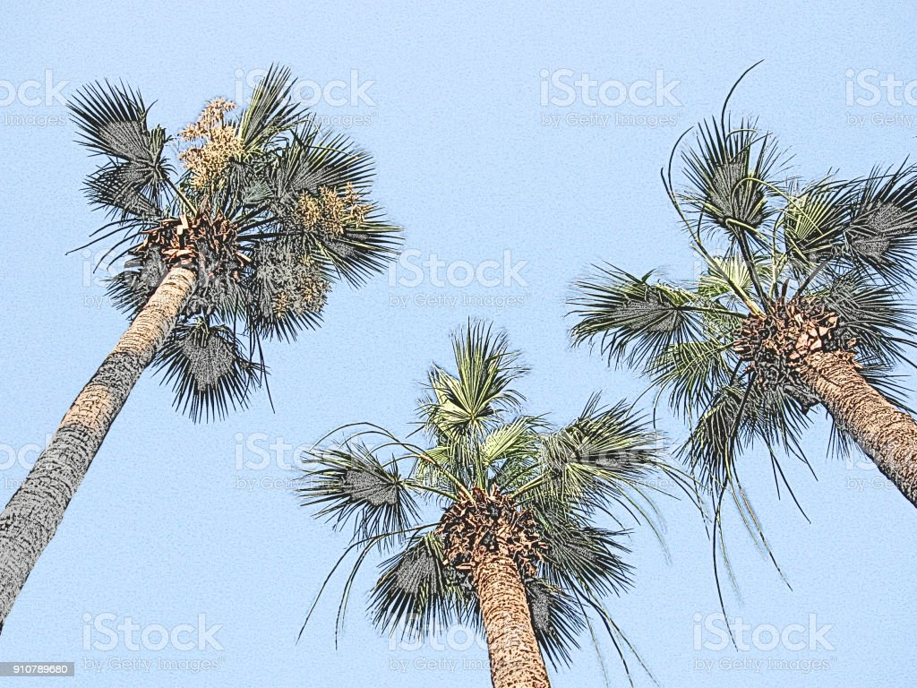 Three coco palm trees' tops, contour colored digital illustration. Exotic island background. Summer tropical concept for greeting cards, postcards, travel booklets, touristic posters, brochures, flyers, banners with text place stock photo