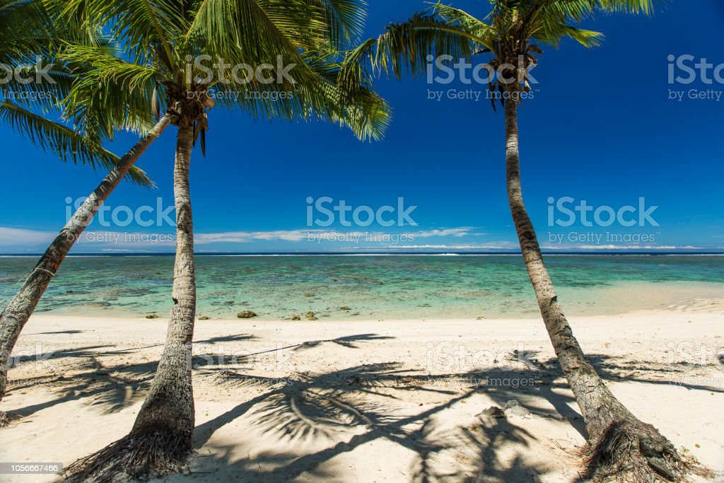 Three coconut palm trees on the beach, shadows of the palm trees on...