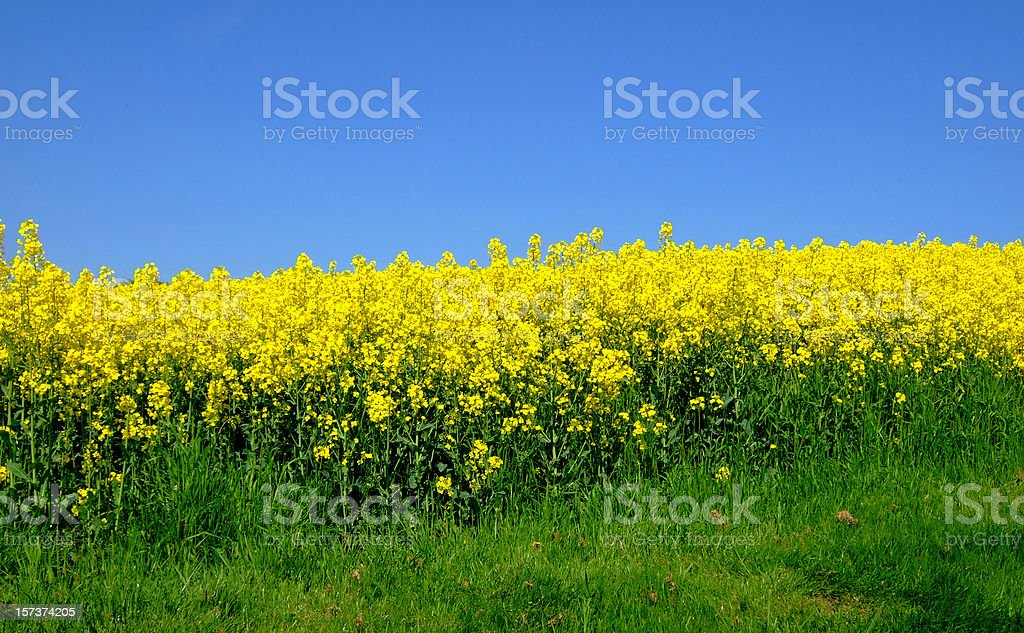 three color field royalty-free stock photo