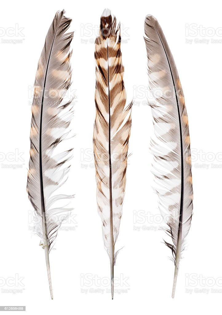 three color forest bird feathers on white - Photo