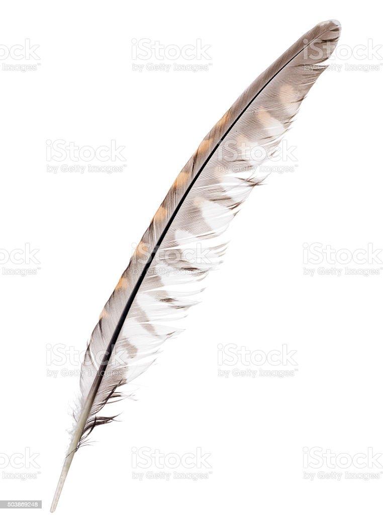 Trois plumes d'oiseaux de couleur isolé forêt - Photo