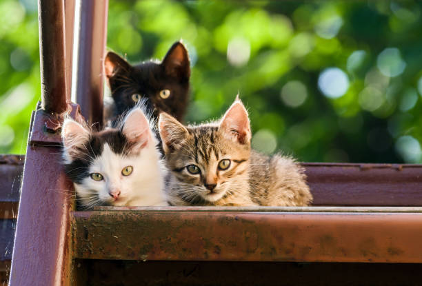 Three colorful kittens look into the camera on a blurred natural background Three colorful kittens look into the camera on a blurred natural background. undomesticated cat stock pictures, royalty-free photos & images
