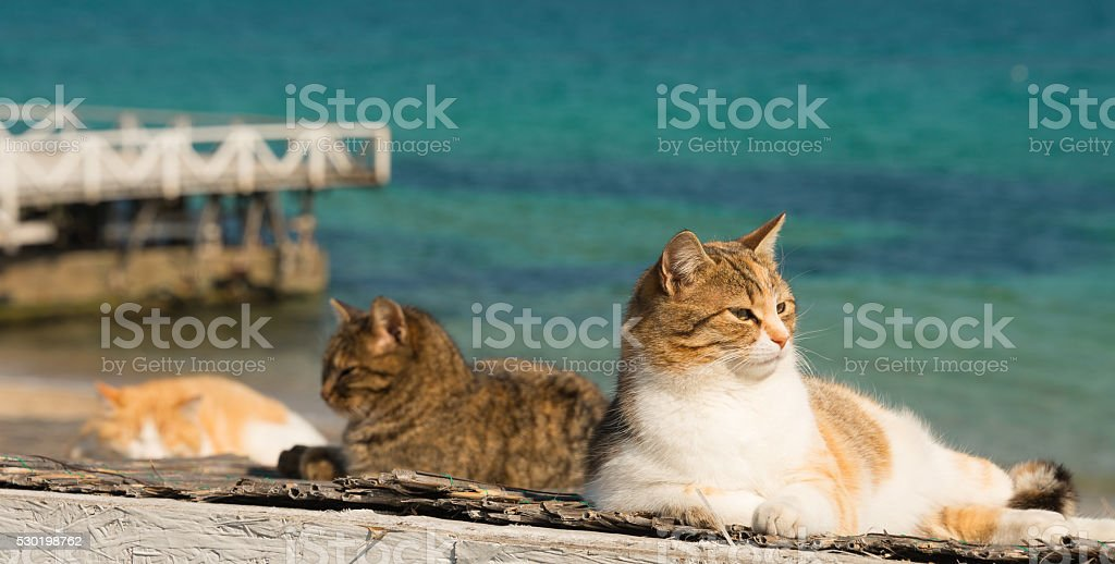 Three cool cat resting on white background pier.