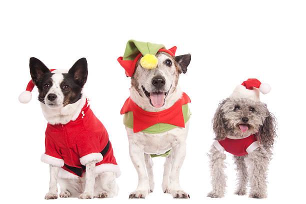 Three cute christmas dogs picture id585618204?b=1&k=6&m=585618204&s=612x612&w=0&h=p7gzzwkmi6avsphitl k5dxytw22wlbusprqsuaqd6i=